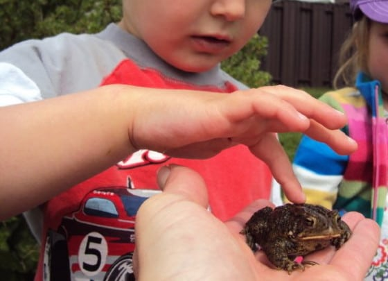 preschoolers touching toad from backyard pond