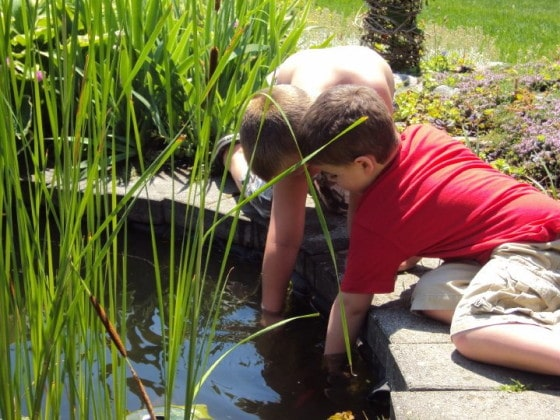 preschool boys kneeling beside pond