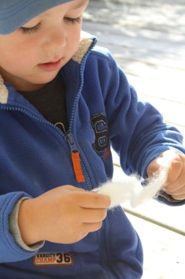 preschooler pulling cotton ball