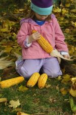Playing with Corn Cobs in the Fall