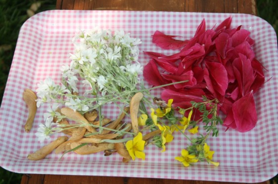 Garden Soup supplies simple science activites for preschoolers