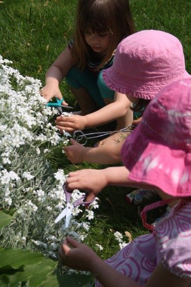 toddlers cutting flowers in garden