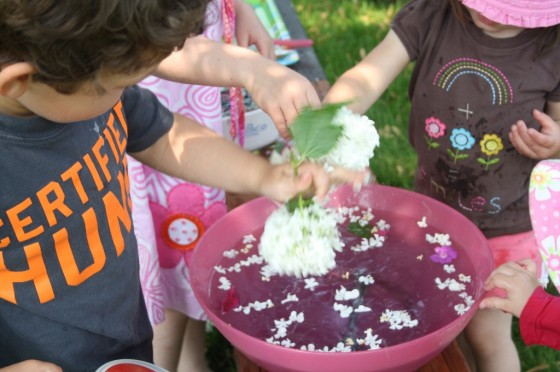 preschooler schaking hydrangea bloom into bowl of water, science learning