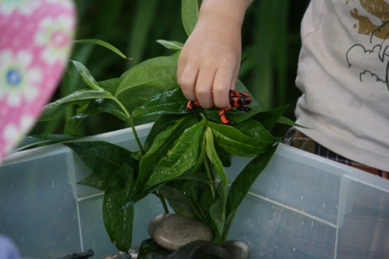 real plants from the garden for dinosaur activity bin
