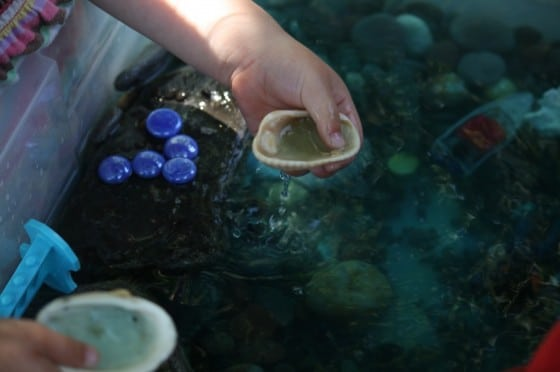 preschooler playing with shells in water