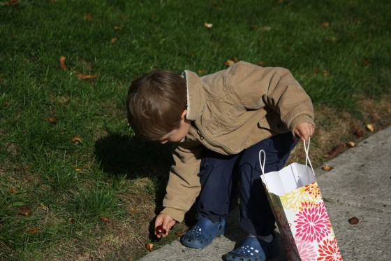 preschool boy putting chestnut in bag