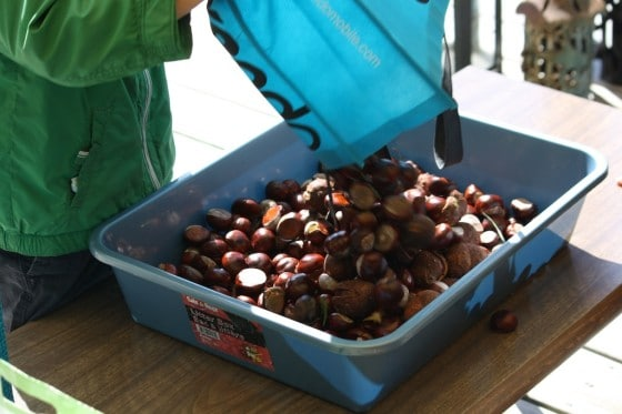 preschooler dumping bag of chestnuts into plastic basin