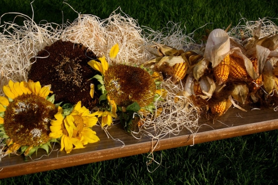 Sensory fun with corn cobs and sunflowers