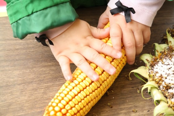 toddlers touching corn cob