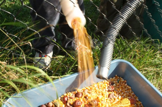corn kernels pouring out of pool hoses