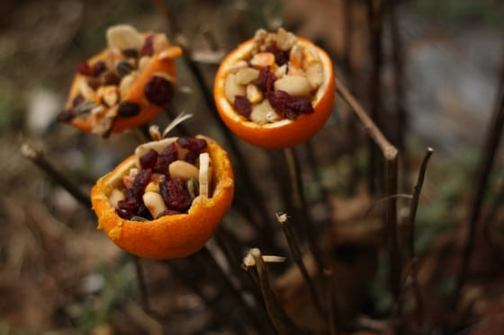 homemade orange cup bird feeders speared onto twigs