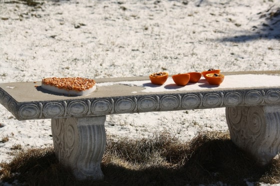 orange peels filled with bird seed on bench in snow