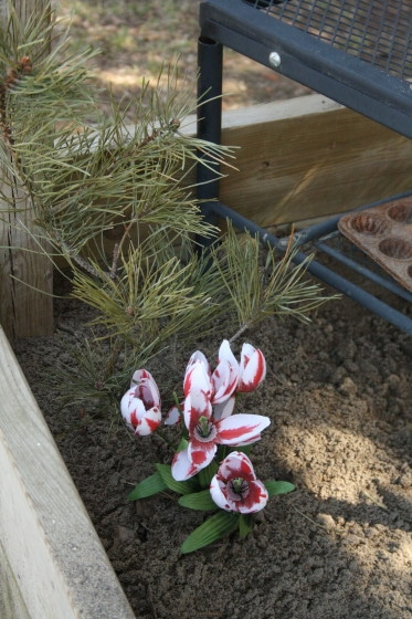 flowers and pine branches in sandbox