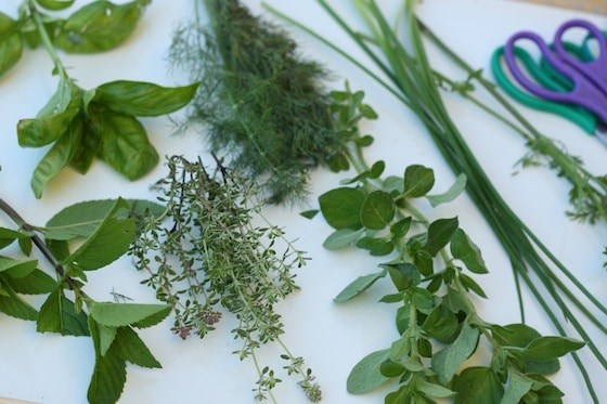Herbs for the herb soup sensory activity