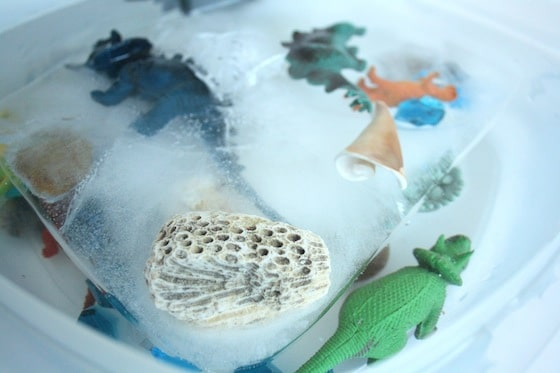 toy dinosaurs and shells frozen in ice