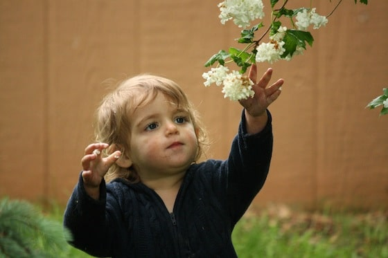1 year old picking flowers in yard