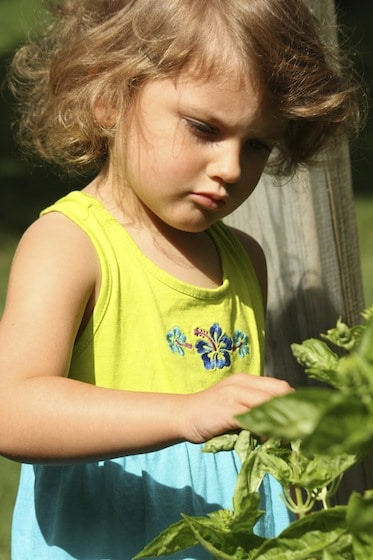 child picking basil