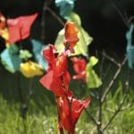 Fall Tree Craft with Twigs and Tissue Paper