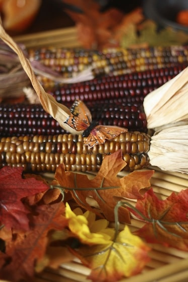 Indian corn on the Fall Sensory Table