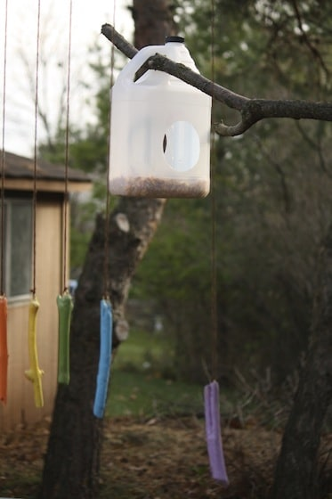 milk jug bird feeder hanging in our tree