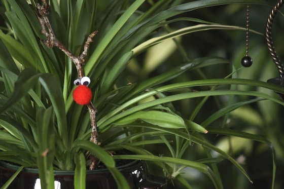 Rascally Reindeer in the spider plant.