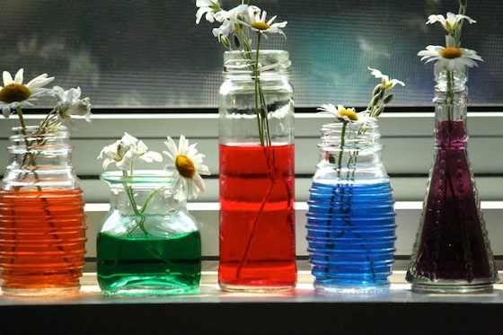 colouring daisies with food colouring