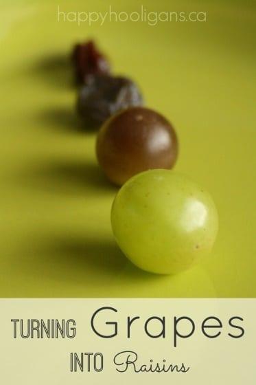 grapes to raisins experiment