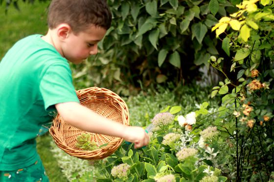 Child cutting leaf from garden