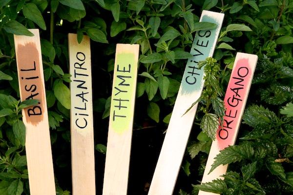 Herb garden markers made with paint stir sticks