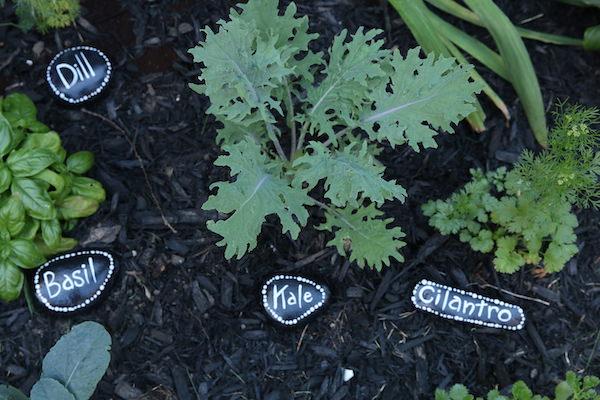 basil, kale, cilantro painted rock garden markers in garden