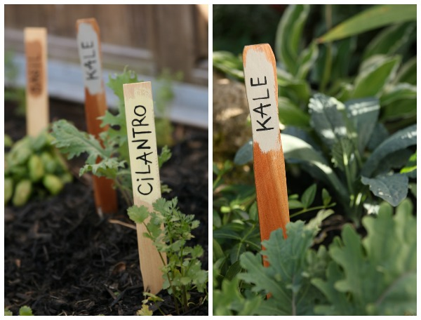 Kale, cilantro, basil garden markers in herb garden